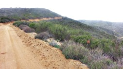 Fire road portion of the course.